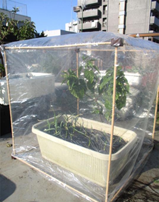 ビニール温室の様子2
